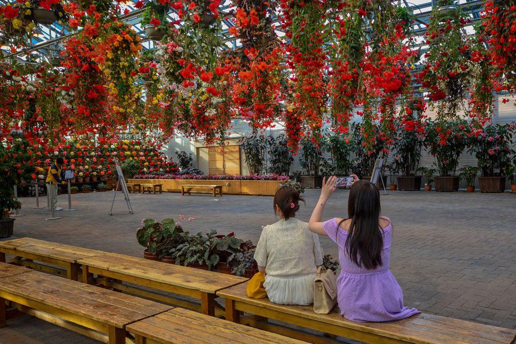 nabana no sato, nagoya, mie, travel, trip, ที่เที่ยว, น่าเที่ยว, Japan, ญี่ปุ่น, นาบานะ โนะ ซาโตะ, มิเอะ, การเดินทาง, เดินทาง, pantip, review, รีวิว, เที่ยวคนเดียว, สวนดอกไม้ ญี่ปุ่น, happy out loud, gagagigy, ชมดอกไม้, ราคา, 2019, summer, หน้าร้อน, กลางวัน, ไปไหนดี, เที่ยวไหนดี